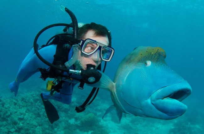 2698955-R3L8T8D-650-fish-and-scuba-diver-funny-priceless-expression