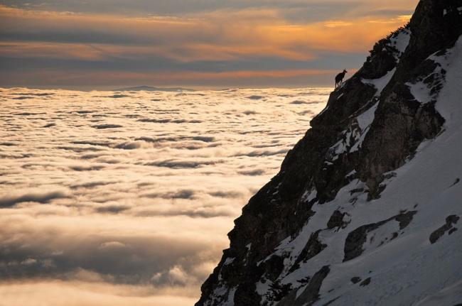 2702655-R3L8T8D-650-chamois-above-clouds-high-tatras-slovakia1