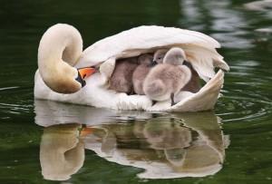 Родительская любовь не знает границ... фото