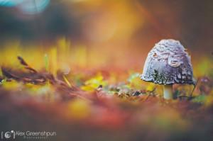 Осенние фото 2