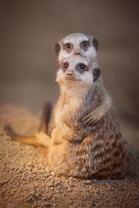 Прекрасные фото животных