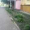 IMG_3784