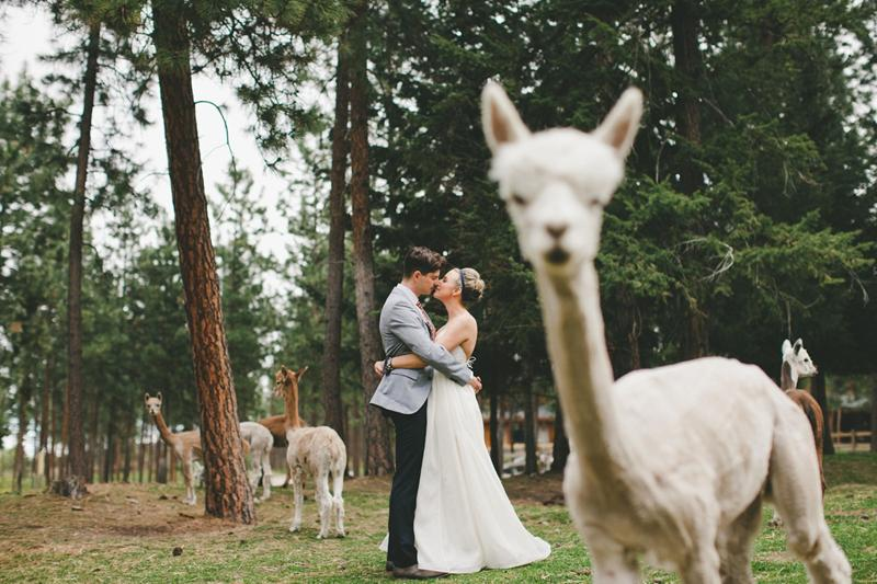 krasivie-svadebnie-foto (2)