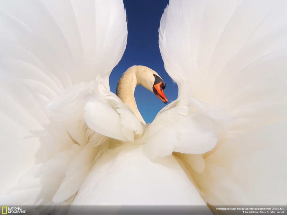 National Geographic-foto13