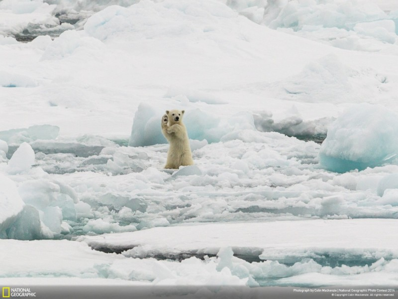 National Geographic-foto18
