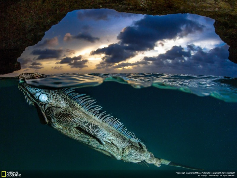 National Geographic-foto3